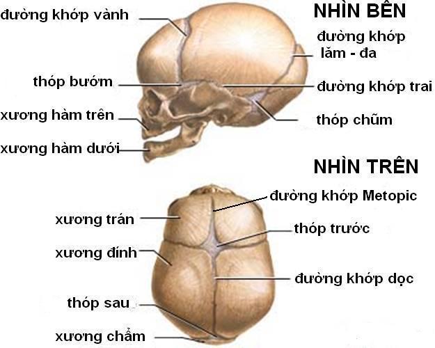 Description: GIAI PHAU CAC DUONG THOP.jpg