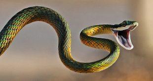 phòng tránh và cách sơ cứu khi bị rắn cắn
