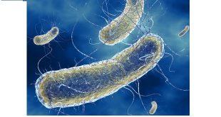 làm thế nào để ngăn chặn vi trùng lây lan