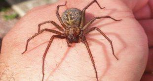 Sơ cứu khi bị nhện cắn