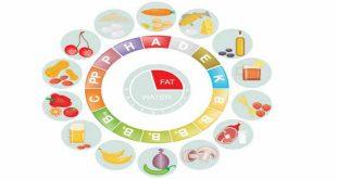 thành phần dinh dưỡng và chức năng hoạt động