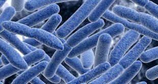 bệnh lỵ trực trùng ở trẻ em - nhiễm shigella