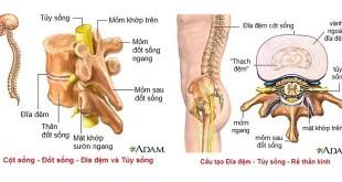 Giải phẫu cột sống và hệ thần kinh ngoại biên