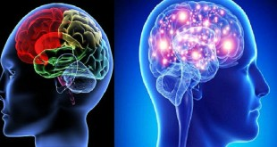 Giải phẫu học và chức năng của não bộ
