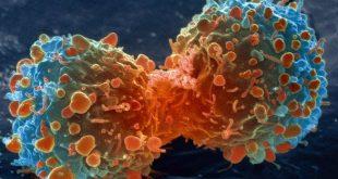 Ung thư và con đường tín hiệu