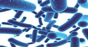lợi ích của men vi sinh trong chăm sóc sức khỏe răng miệng