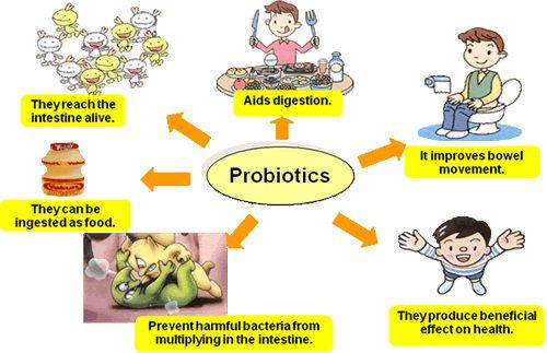 Hiệu quả của men vi sinh