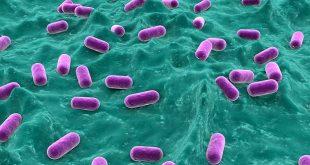 Hiểu sâu hơn về men vi sinh