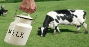 Hormone tăng trưởng tổng hợp cho bò và sữa bò – hiểu thông tin sao cho đúng nhất?