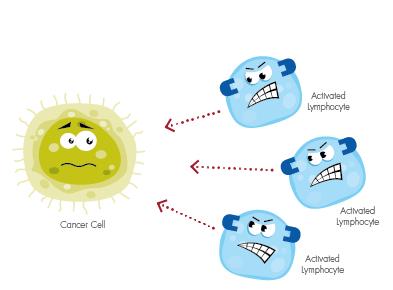 Nguyên lý chung của các liệu pháp miễn dịch là kích hoạt hệ miễn dịch để nhận diện và ức chế, loại bỏ tế bào ung thư