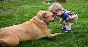 Nhiễm giun sán từ chó, mèo và động vật nuôi khác