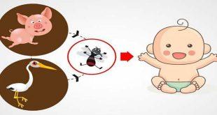 Viêm não Nhật Bản ở trẻ em