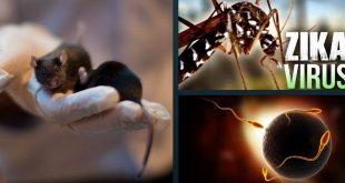 Virus Zika - Bệnh và phòng