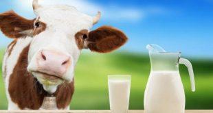 Sự thật về sữa bò và sữa thực vật - Sữa nào tốt cho bạn
