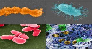 Thế giới vi sinh vật trong cơ thể con người vẫn còn bí ẩn với khoa học?