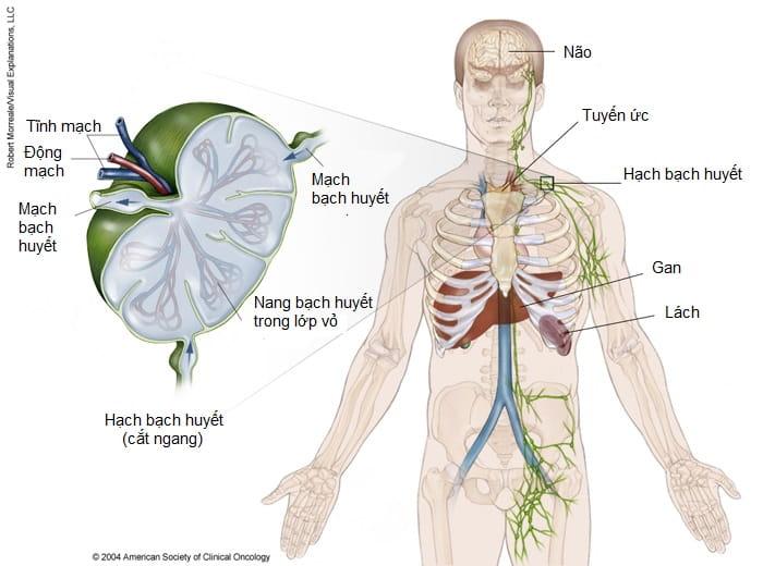 Thống kê về bệnh bạch cầu mãn tính dòng Lympho