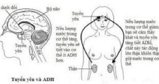 Dấu hiệu và biến chứng của bệnh đái tháo nhạt thai kỳ