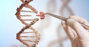 Ung thư vú và ung thư buồng trứng di truyền