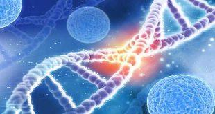 Bệnh Đa Polyp liên quan gen MUTYH
