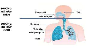 Nhiễm trùng hô hấp dưới