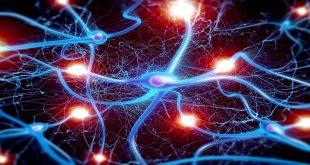 Bệnh lý thần kinh ngoại biên do hóa trị