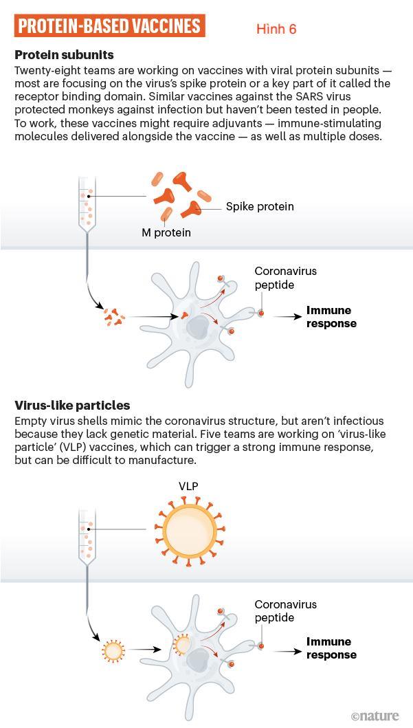 Cuộc đua tìm vaccine trị SARS-CoV-2 (6)