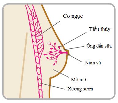 U xơ tuyến vú