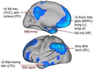 """Sự kích hoạt của các vùng não thuộc """" Mạng chế độ mặc định """" (DMN)"""
