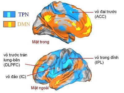 """Sự kích hoạt của các vùng não thuộc """" Mạng chế độ mặc định """" (DMN) và """" Mạng tác vụ tích cực """" (TPN),"""